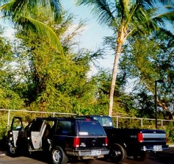 """[April 13, 1999: Our two trucks, reunited on Maui, line up for a portrait. After spending their entire """"lives"""" in the Upper (Brrrr) Midwest, the trees look strange to them.] style="""