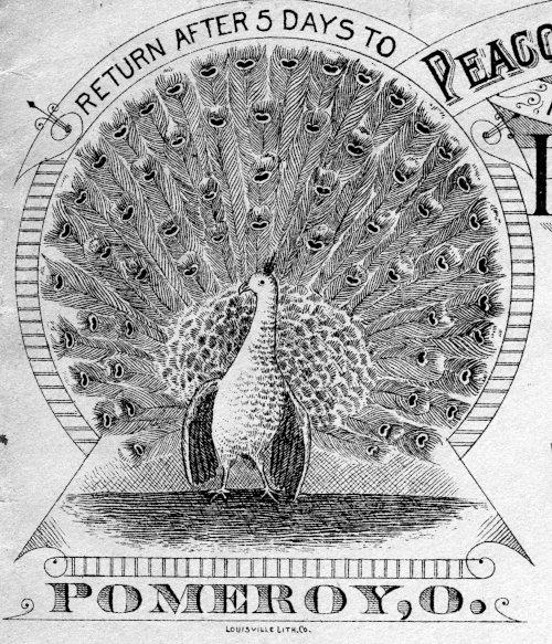 [Ornate Peacock Design]