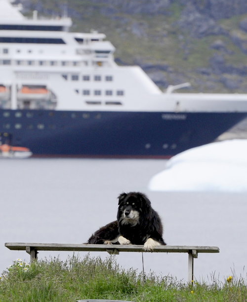 [Dog at Port with Veendam and Iceberg in Background] style=