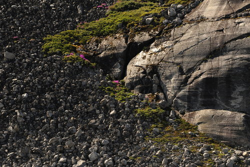 [Moraine, Arctic Plants, and Waterfall, Prince Christian Sound] style=