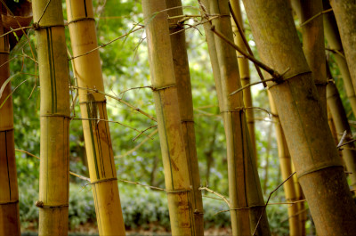 [Bamboo Forest]