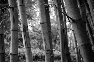 [Bamboo Forest (BW)] style=